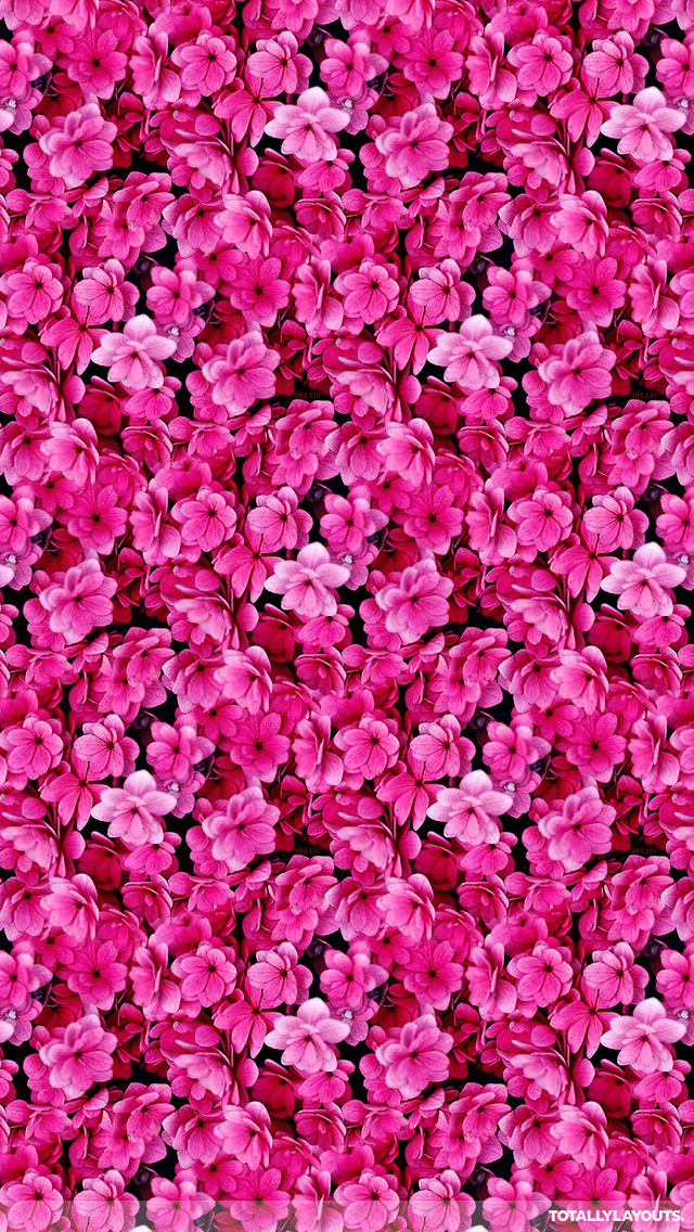 Bright Pink Flower Montage Whatsapp Wallpaper Floral Whatsapp
