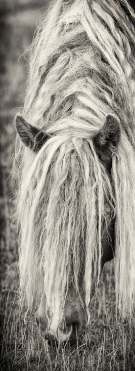 "myviewfromsomewhere: "" (via Pin by Shabby Cottage Studio- Gail Schmidt on Animal Love | Pinterest) """
