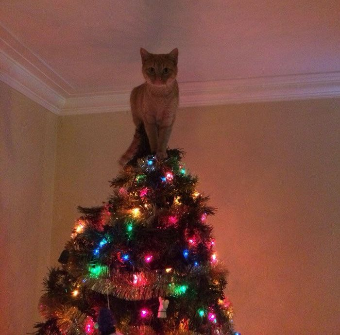 10+ Of The Most Creative Christmas Tree Toppers Ever Cat climbing