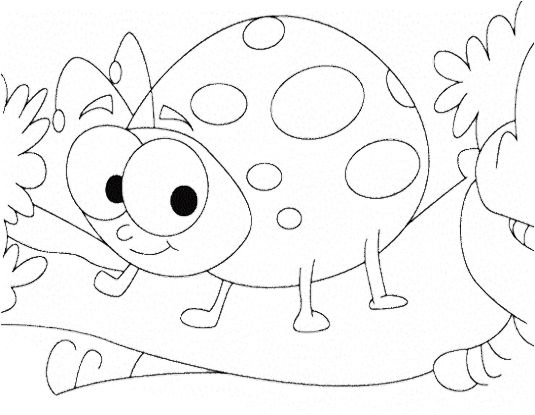 Cute Ladybug Insect Coloring Pages