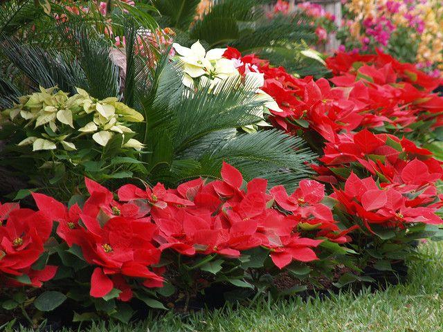 Flores para você cultivar em casa - Flores  | Belas-e-Maravilhosas-Flores-Cultivadas-em-Casa