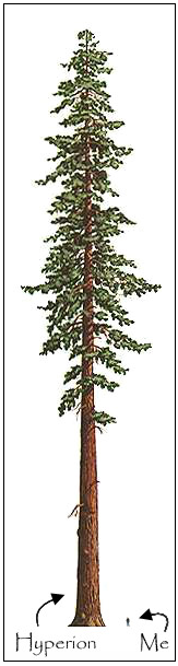 Another Good Reference For Dimension Bonsai Tree Tattoos Tree Tattoo Designs Tree Silhouette