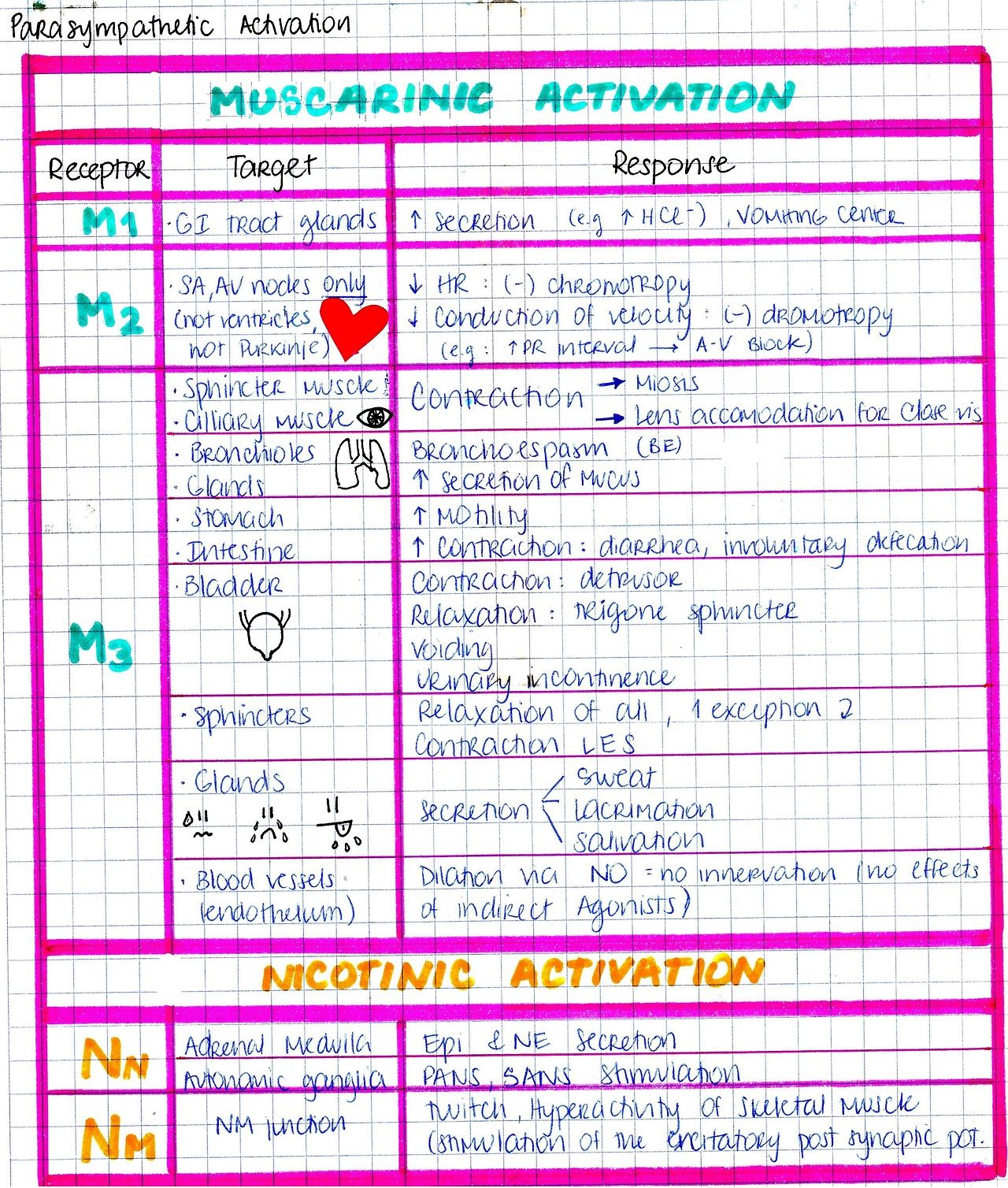 Muscarinic And Nicotnic Activation