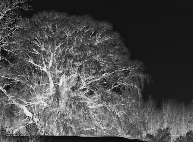 Horror Frost: ©Jim Charnon Photography;  All Rights Reserved