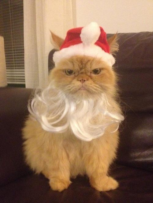 Lol. Santa Paws.