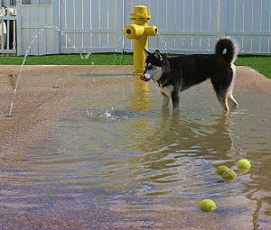 New Doggie Pool Party And Water Park Halliday S Pet