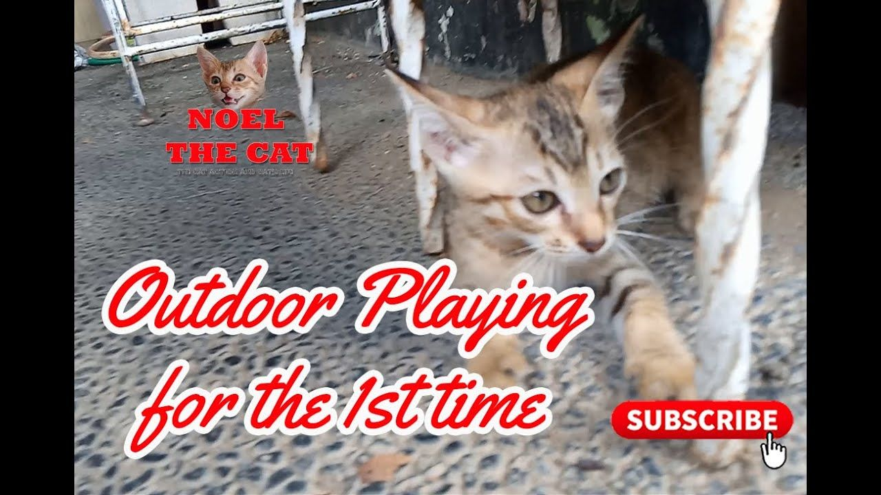 Noel The Cat Out Door Playing For The First Time In 2020 Cats Noel Cute Cat
