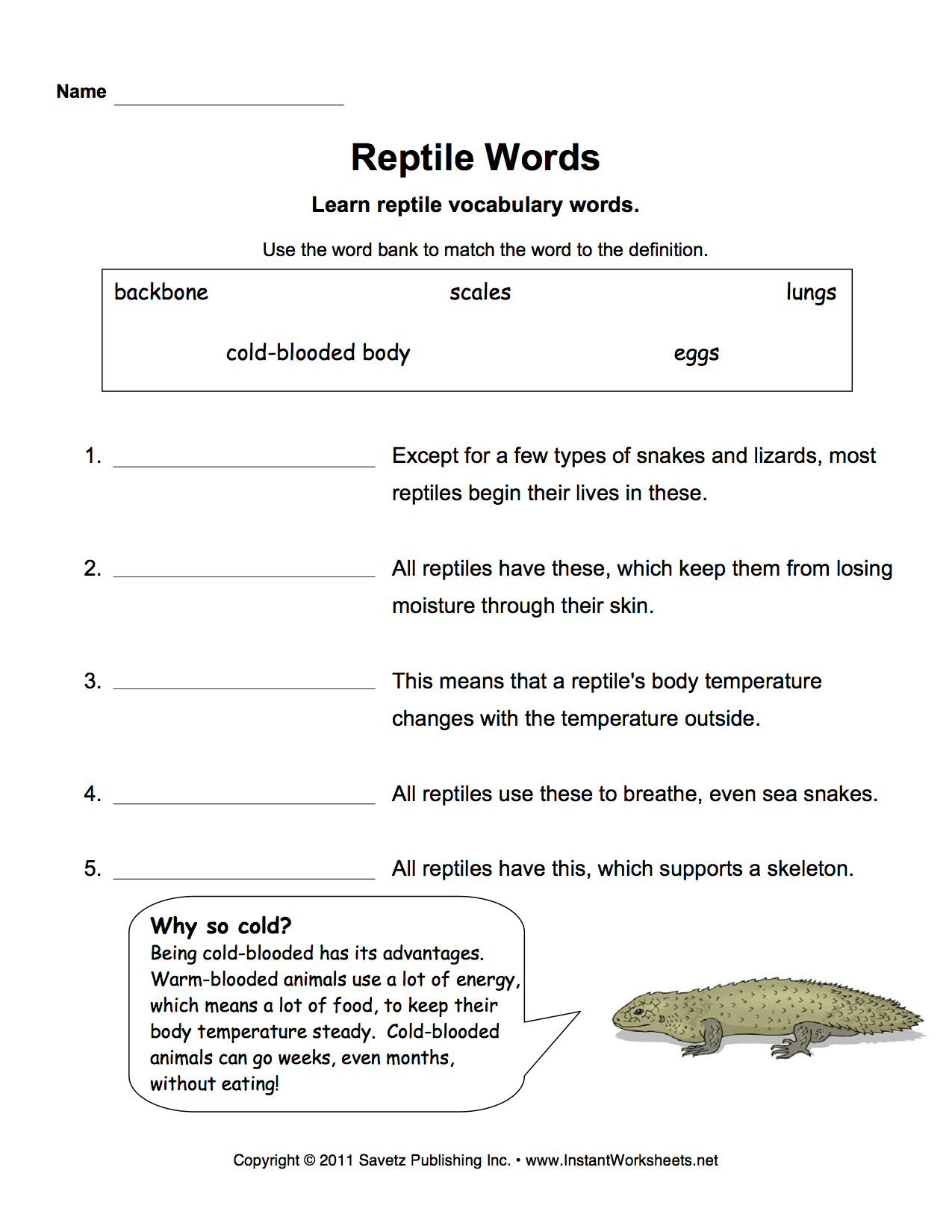 Reptiles Worksheet Vocabulary Words Science Units Animal Conservation [ 1650 x 1275 Pixel ]