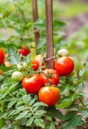 Épinglé par Marie jeanne sur jardinage | Quand planter des légumes, Jardinage potager, Cultiver ...