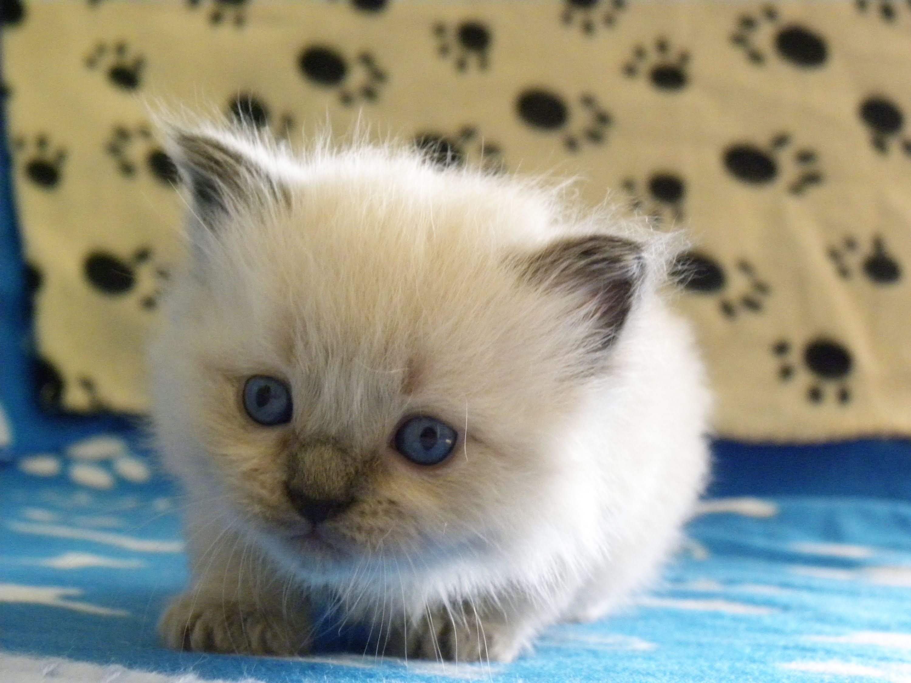 Kitten Time Lapse Watch Them Grow Up In Just 5 Minutes Http Allkitties247 Com Cat Photo Videos Kitt Kitten Pictures Cats And Kittens Cat Lovers