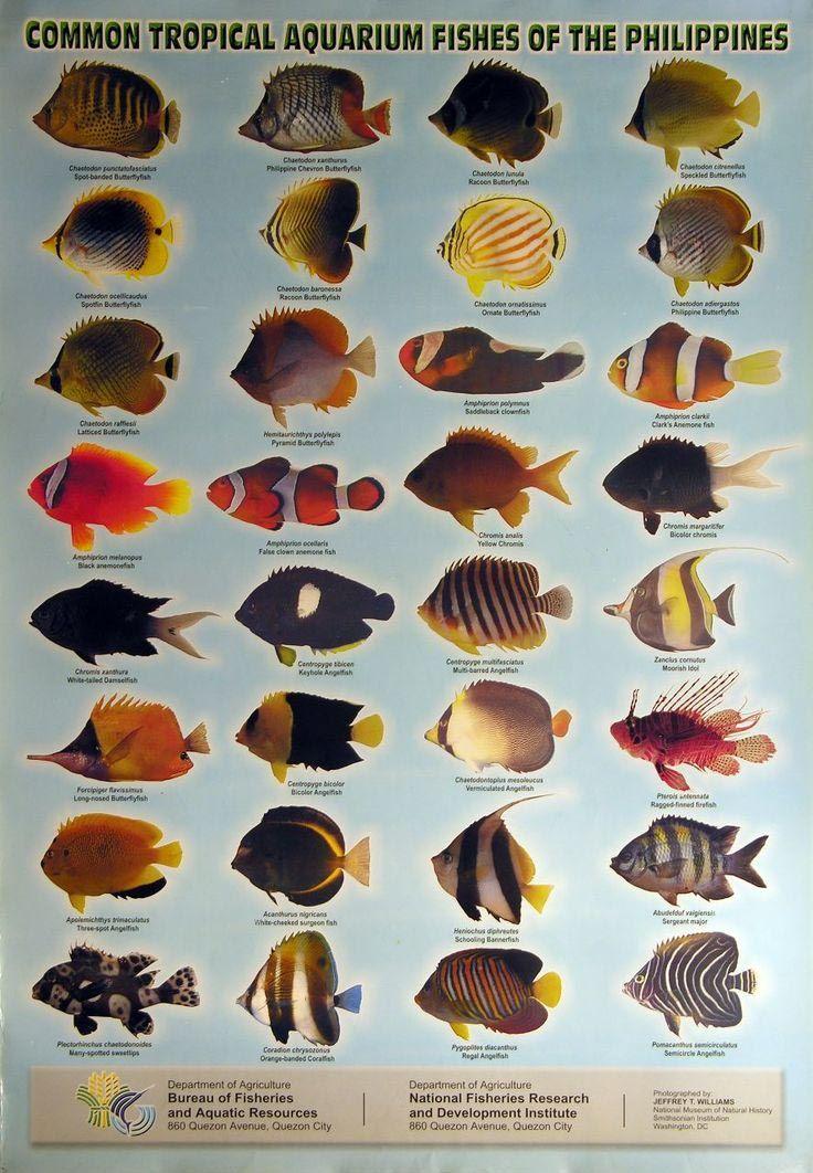 Marine Aquarium Fish List Marine Aquarium Fish Aquarium Fish Tropical Fish Aquarium