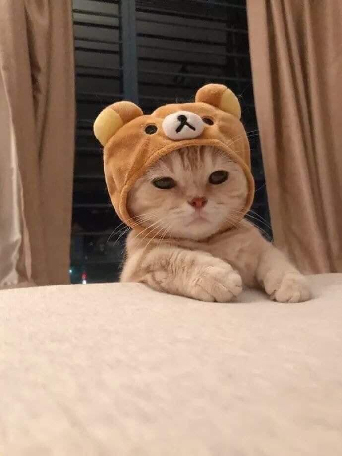 rilakkuma is that you? #Music #IndieArtist #Chicago