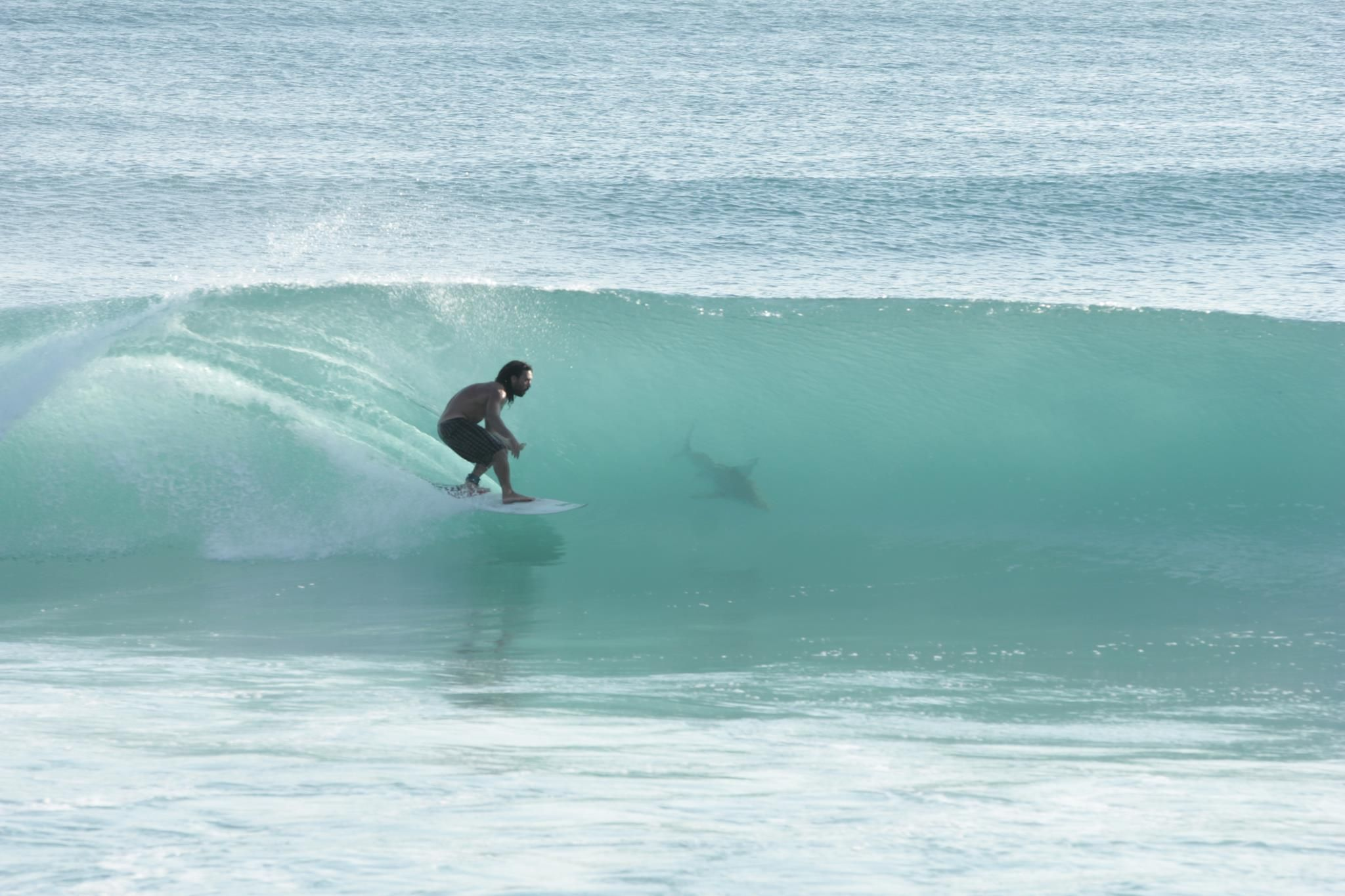 Surfing With A Shark Juno Beach Florida Surfing With
