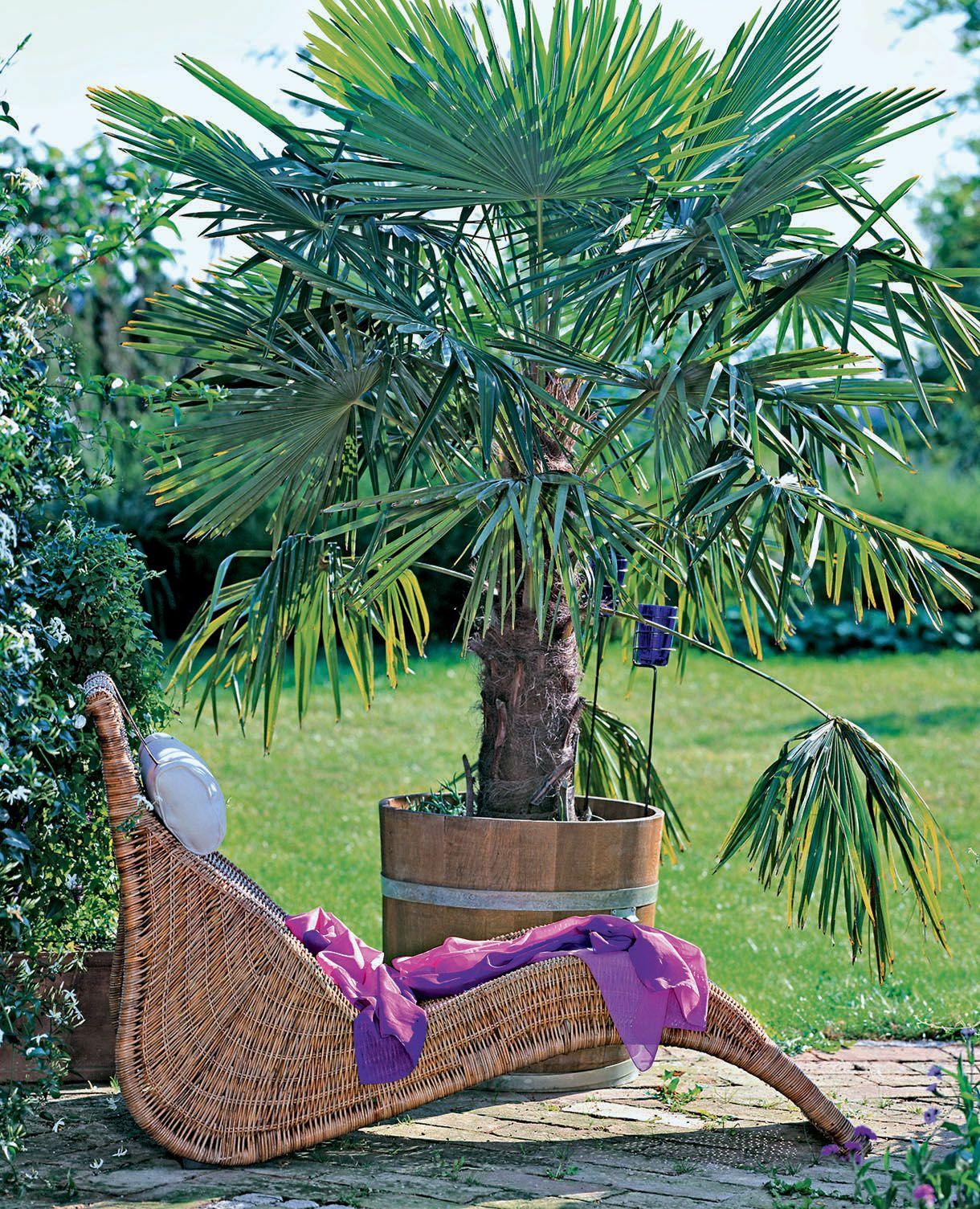 Comment Creer Un Jardin Exotique Durable Jardin Exotique Jardins Jardin Tropical