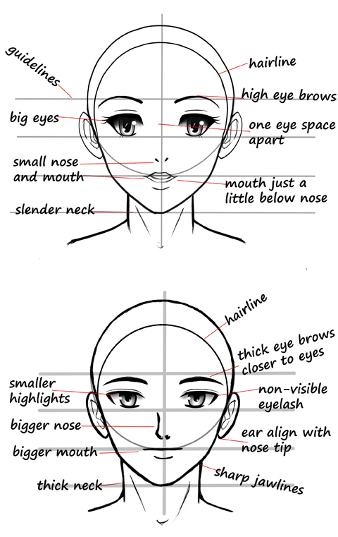 manga reference charts art education female face drawing guy Order of Draw Phlebotomy Chart chart showing difference between male and female face features