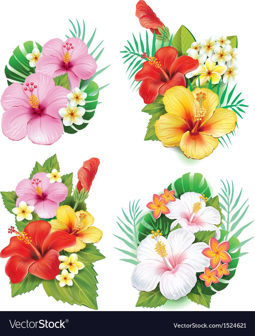 27++ Hibiscus flower clipart download ideas in 2021