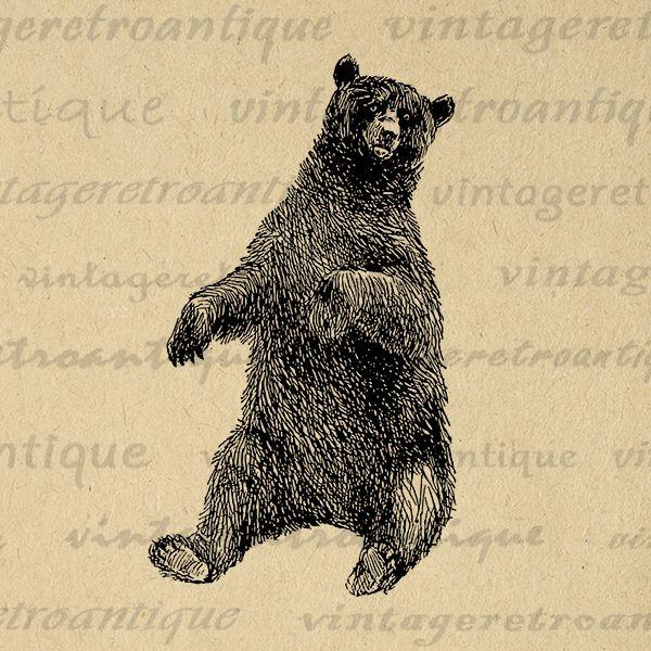 Printable Bear Art Graphic Bear Digital Image Download Forest Nature ...
