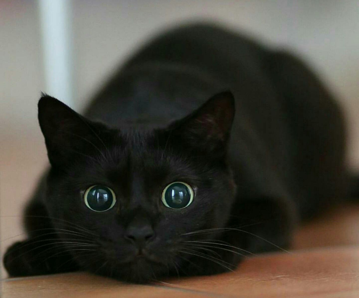 Cute Black Cats and Kittens