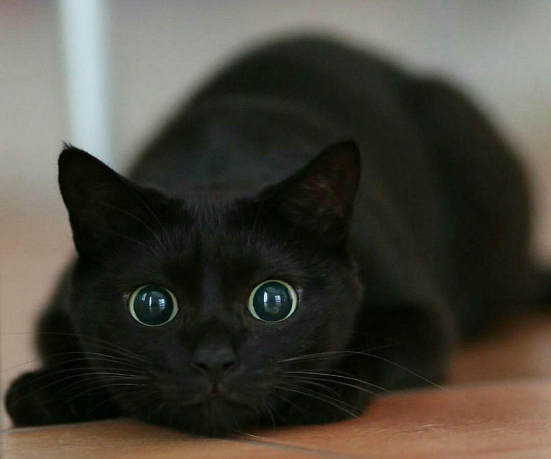 Crazy Cat Eyes