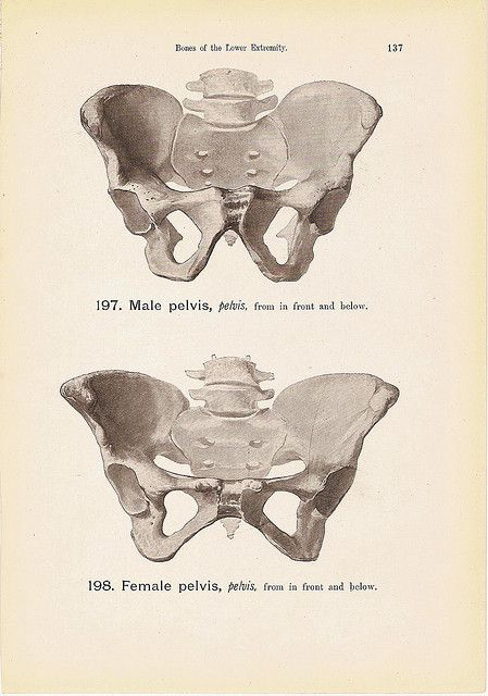 Female And Male Pelvis Bones Anatomy Print Black And White Steel