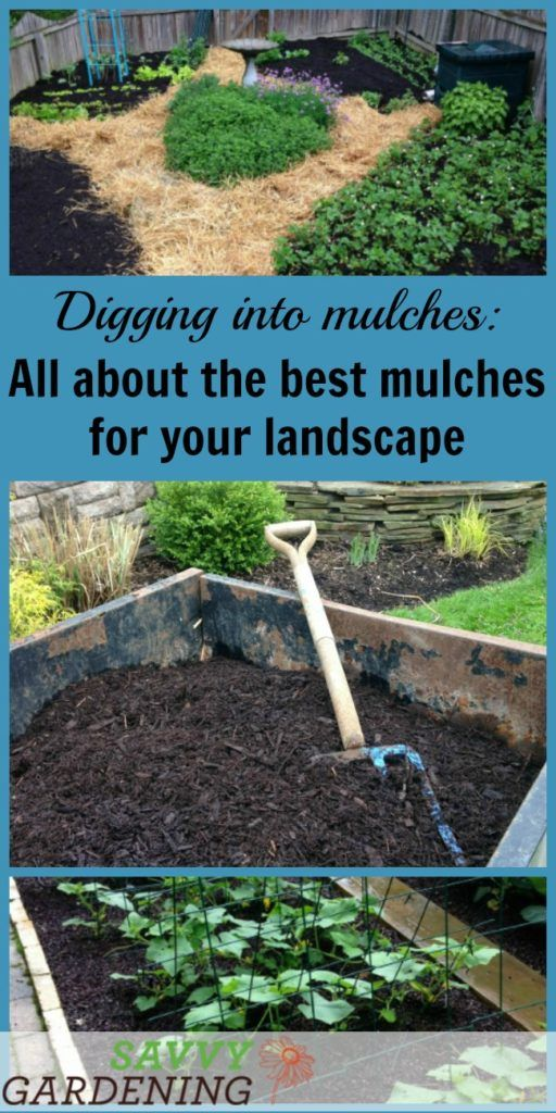Digging Into Mulches: Types Of Landscape Mulch For Your Garden