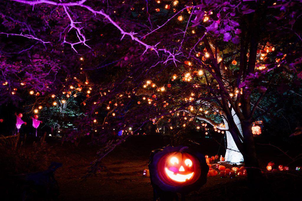 Skylands Christmas Lights 2020 Pin on Halloween 2020