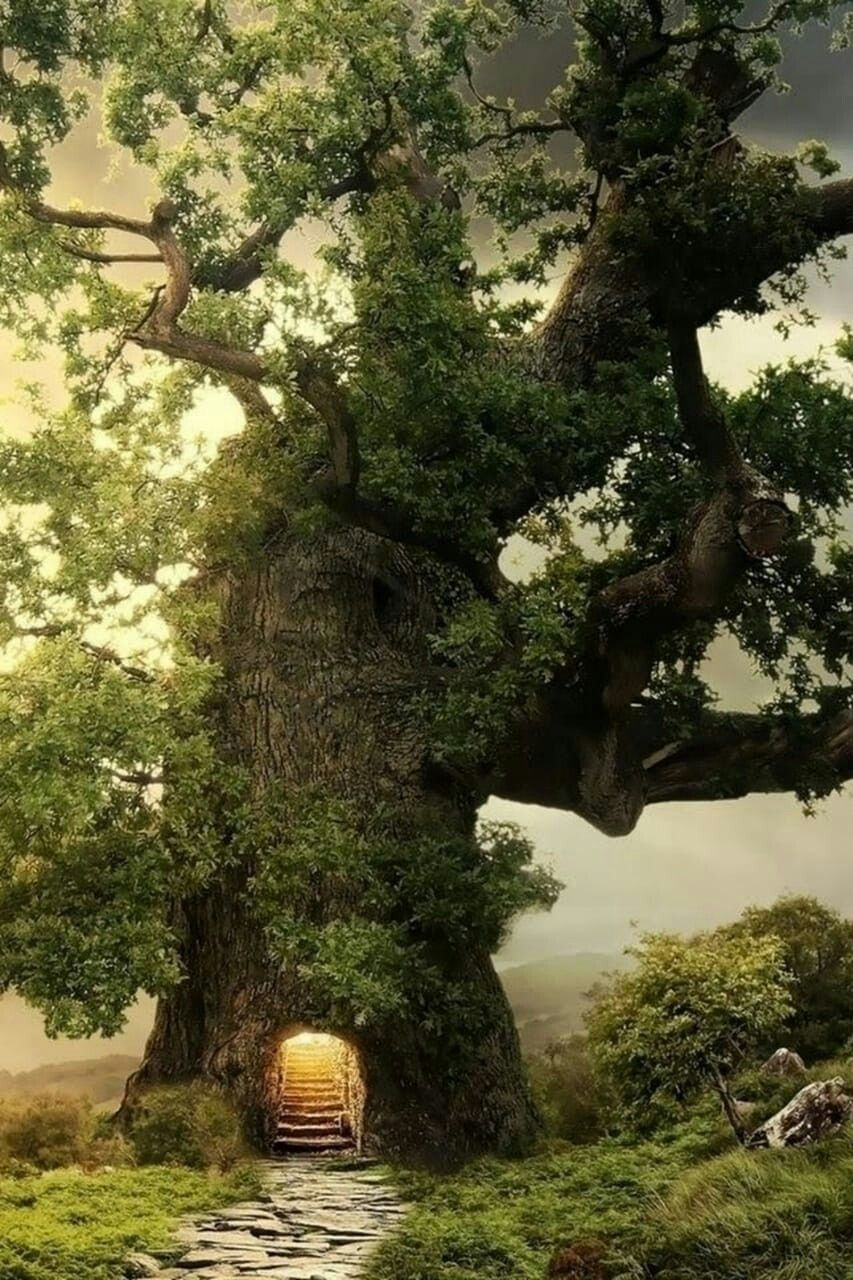 сказочные деревья фото всех климатических регионах