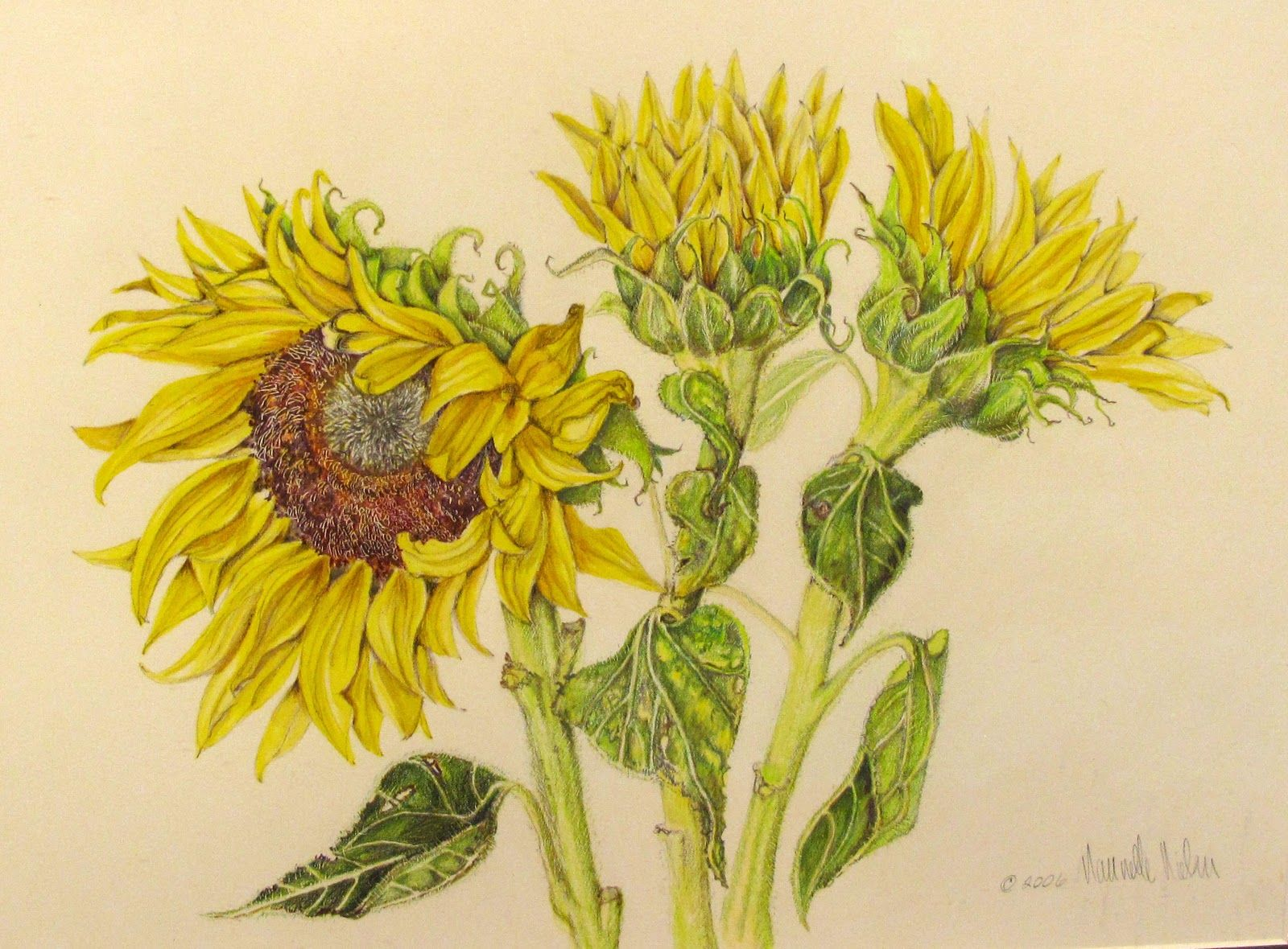 Sunflower Line Drawing : Botanical sunflower sketch tattoo design pinterest