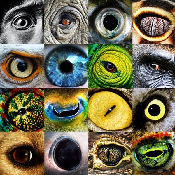 Tier Augen   AUGEN von TIEREN   Pinterest   Auge, Tier und Zeichnen ...