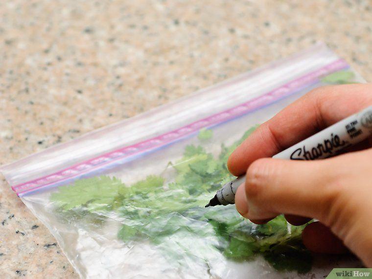 Freeze cilantro freezing cilantro cilantro frozen