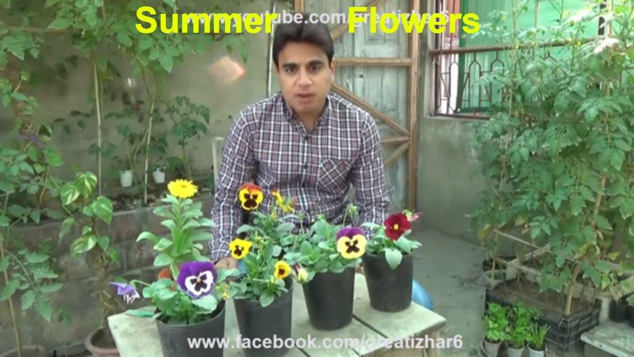 Summer Season Flowers List Popular Summer Flowers Flower For Beauty Flowers Name List Flowers Name In Hindi Summer Flowers