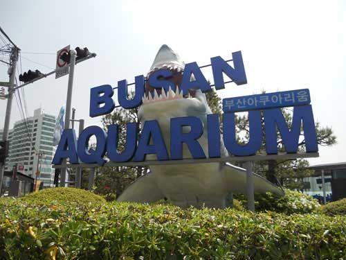 Busan Aquarium, Busan, South Korea.