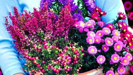 Herbst: Pflanzen und Deko für Balkon und Terrasse #herbstdekoeingangsbereich