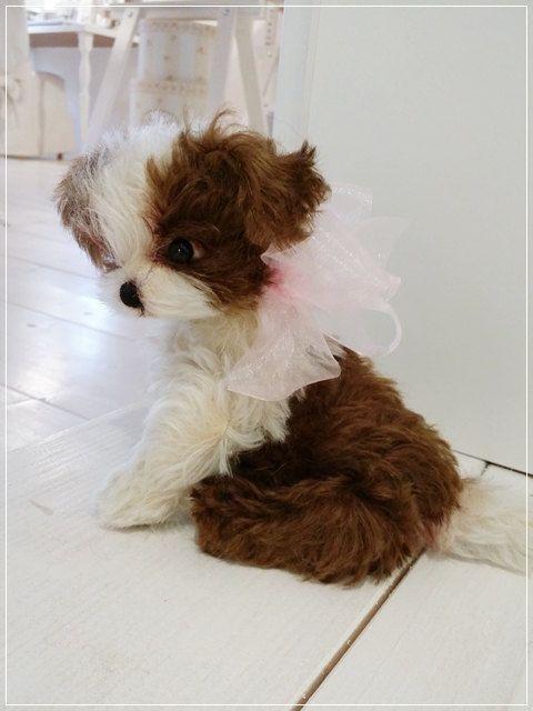 Pdf Sofort Download Schnitt Ebook Misha Bolonka Zwetna Welpe 17 22 Cm Teddy Manufaktur De Eileen Hecht Dog Crafts E Book Stuffed Toys Patterns