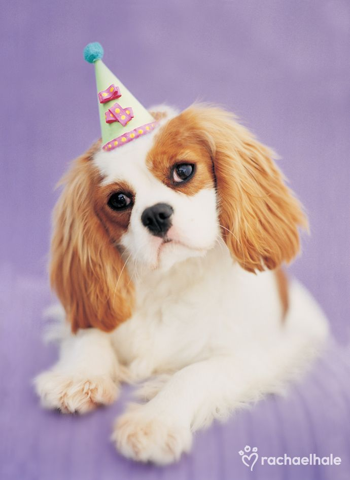 Happy Birthday Cavalier King Spaniel King Spaniel King Charles Dog