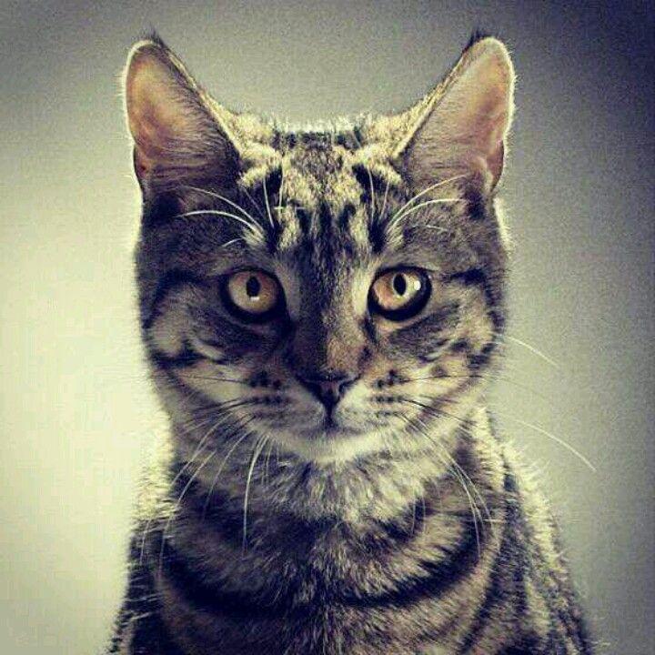 Jake's cat
