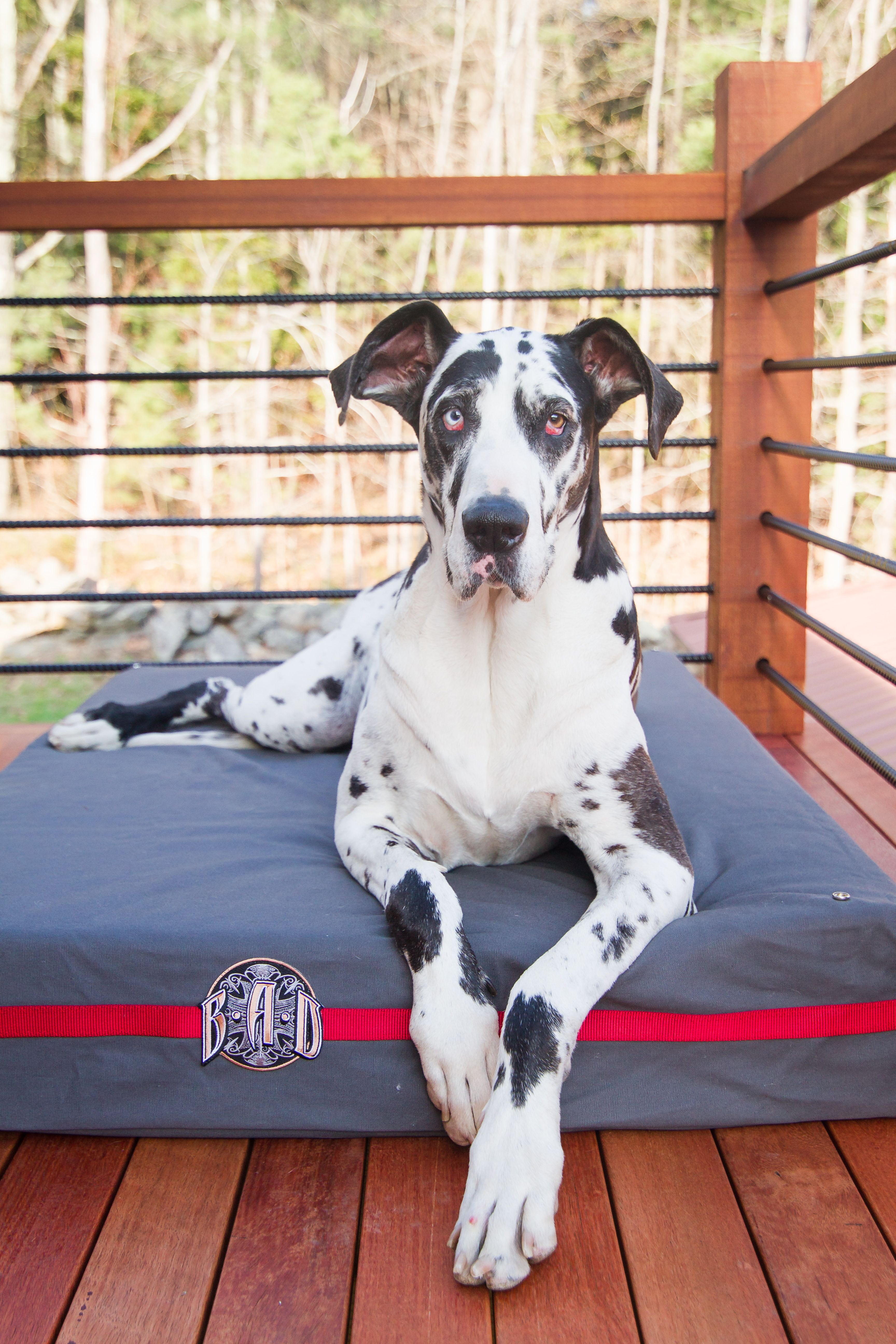 Grey large dog bed comes with all of BAD Company's
