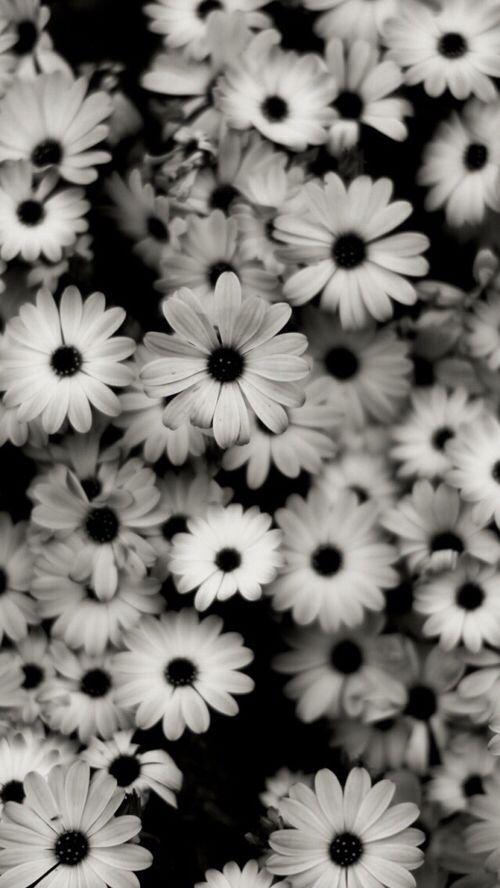 Pinterest Donutlookatme Deep Wallpaper Black And White Wallpaper Iphone Wallpaper Black and white flower wallpaper iphone