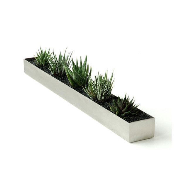 Gus Modern Stainless Steel Plant Trough Succulents Love