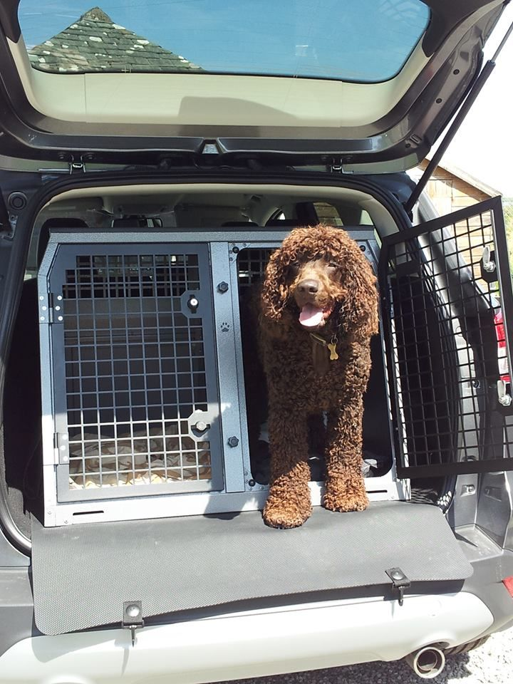 Irish Water Spaniel In Transk9 B21 Dog Transit Box Www Transk9 Com