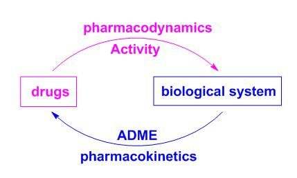 pharmacodynamics defined study of a drug effect biology essay Pharmacodynamics focuses on the effect that a drug can exert on the biology of the body pharmacokinetics focuses rather on how the body affects the drug, in terms of its absorption, metabolism.