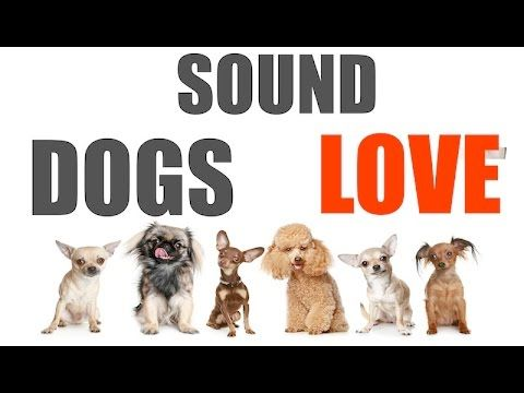 Sound Dogs Love All Time Hq Youtube Dog Love