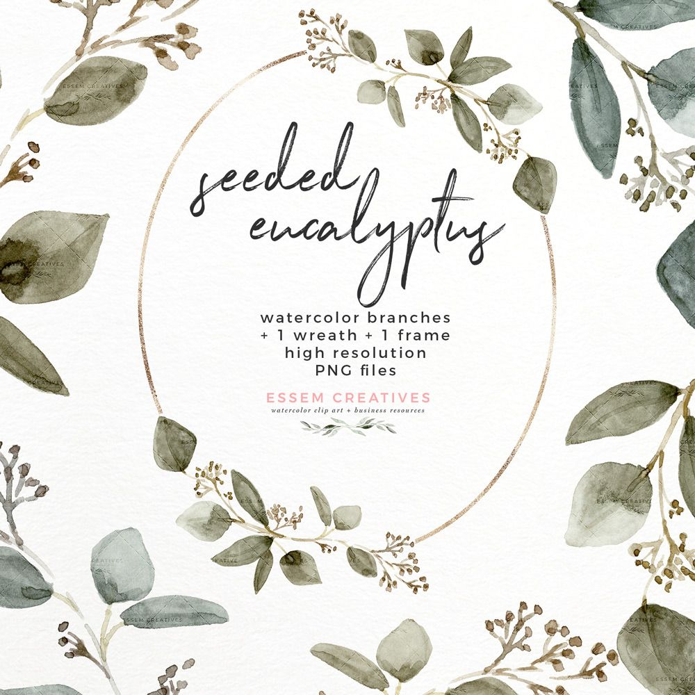 Seeded Eucalyptus Watercolor Leaves Clipart Graphics With