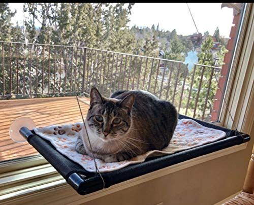 Magnificent Cat Bed Window Perch Hammock With Free Blanket Sunny Seat Dailytribune Chair Design For Home Dailytribuneorg