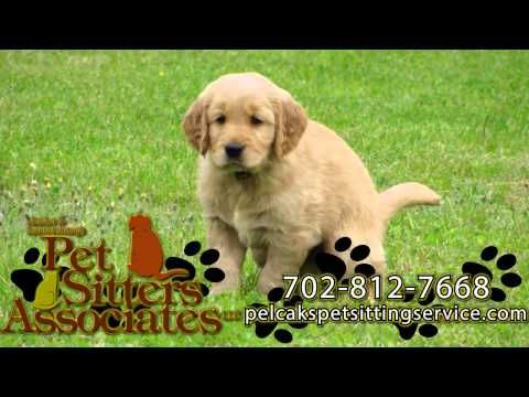 Pelcak S Pet Sitting Service Pet Services In Colorado Pet