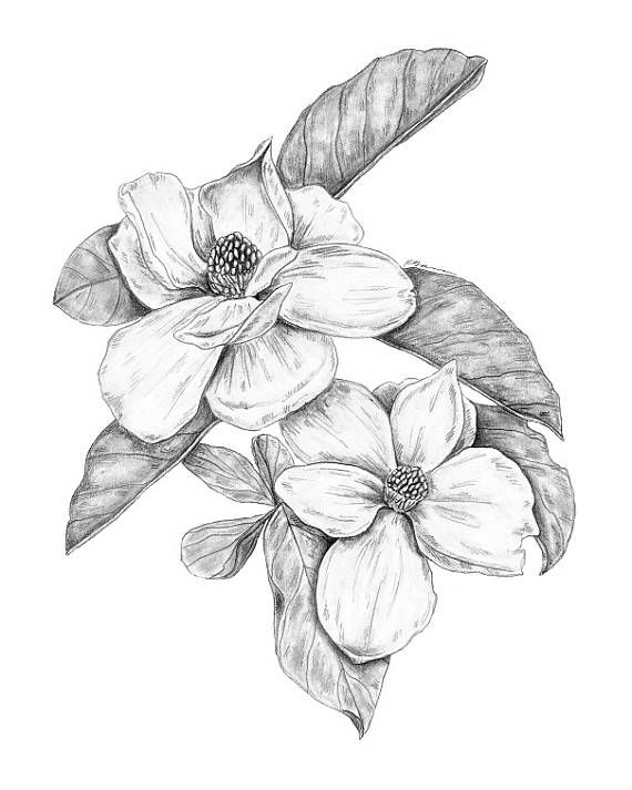 Magnolia Flower Flower Art Print Magnolia Print Minimalist Etsy Flower Prints Art Flower Drawing Flower Art