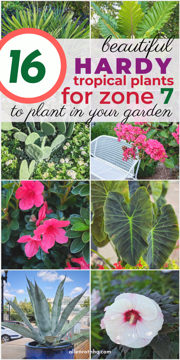 Best Hardy Tropical Plants For Zone 7 In 2020 In 2020 Plants