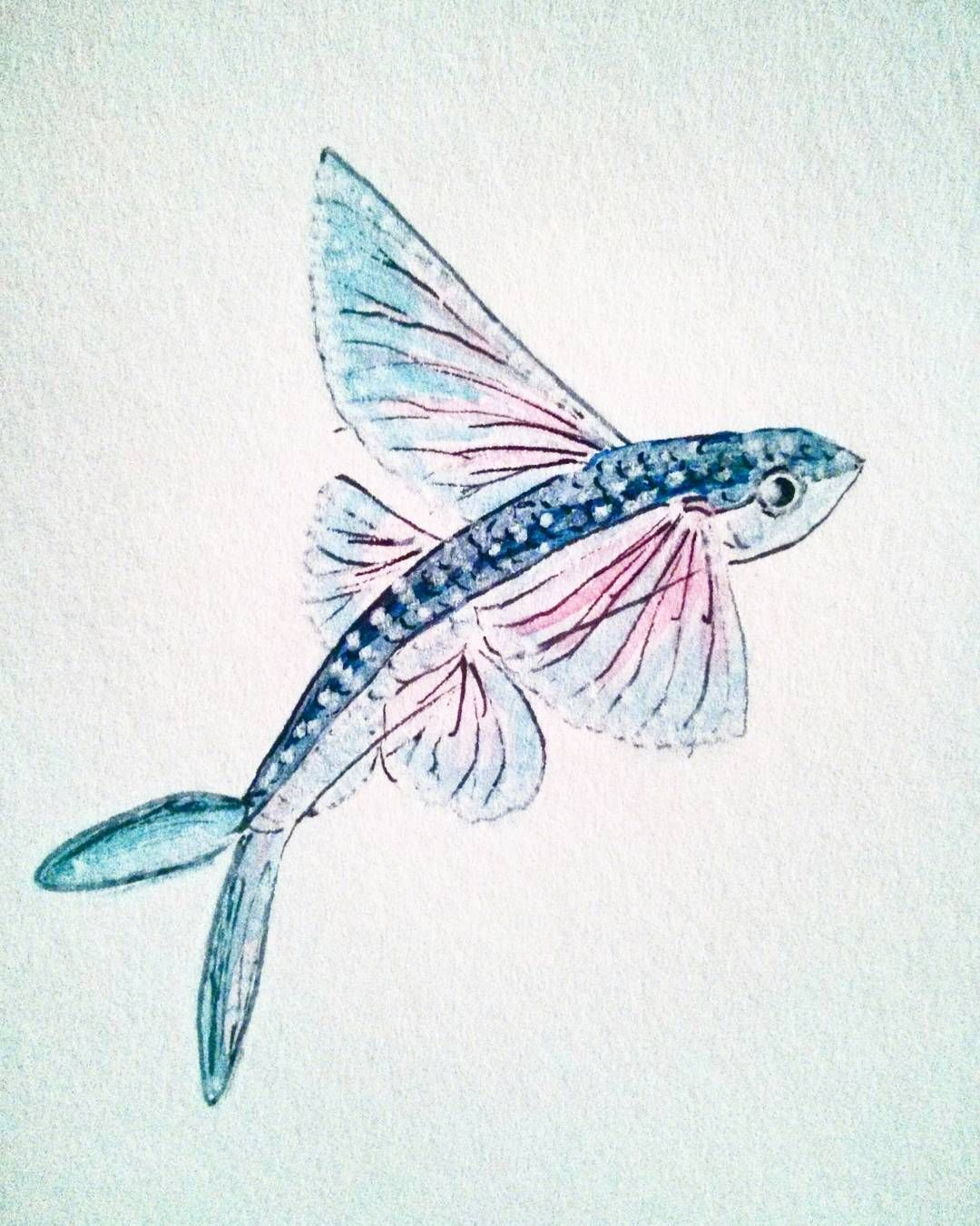 Flying Fish Flyingfish Watercolor Drawing Art Blue Pink
