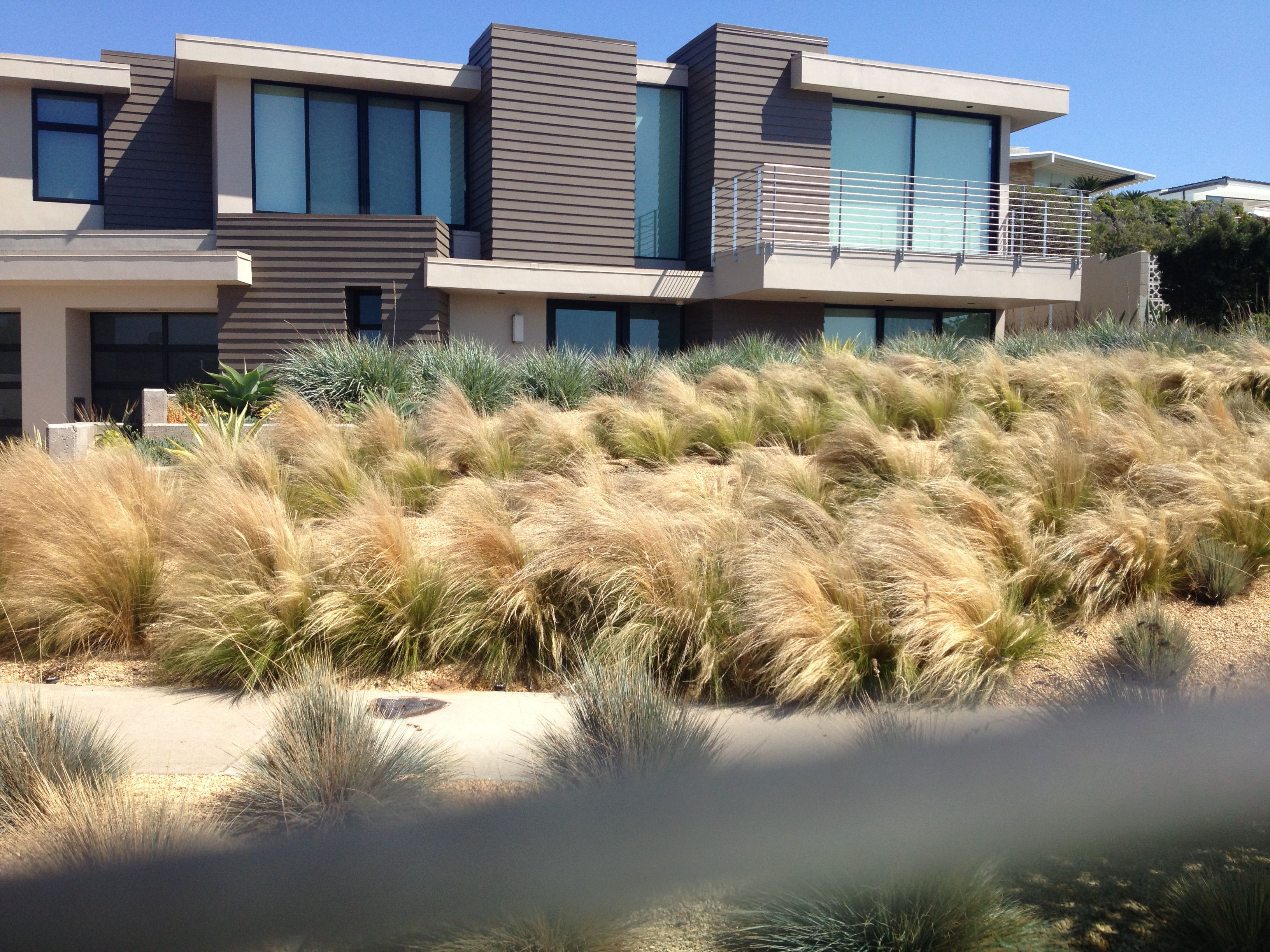 Landscaping grasses in mass alta vista landscaping pinterest