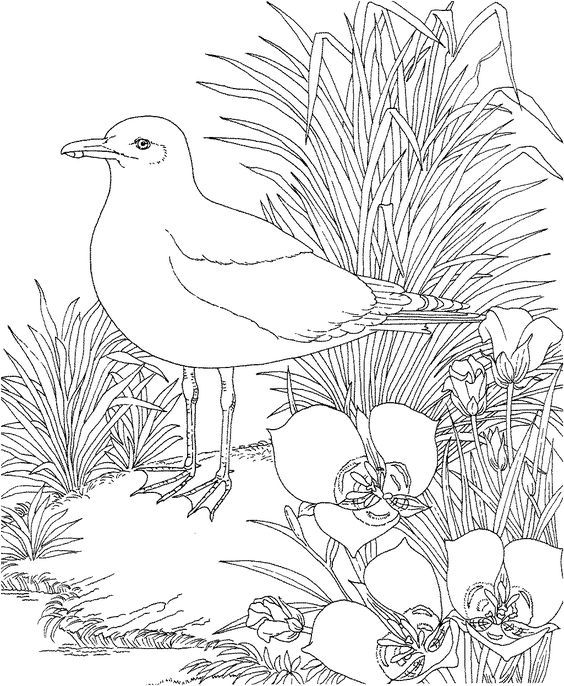 Free Printable Coloring Page Utah State Bird And Flower Seagull